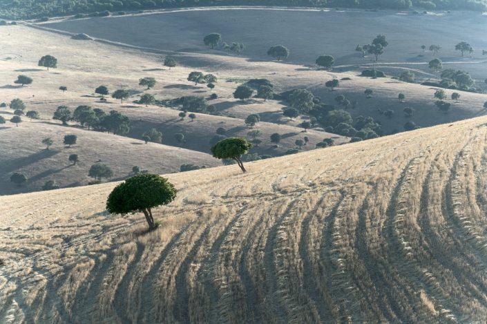 Campos de España