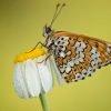 Animalia - Butterflies 02