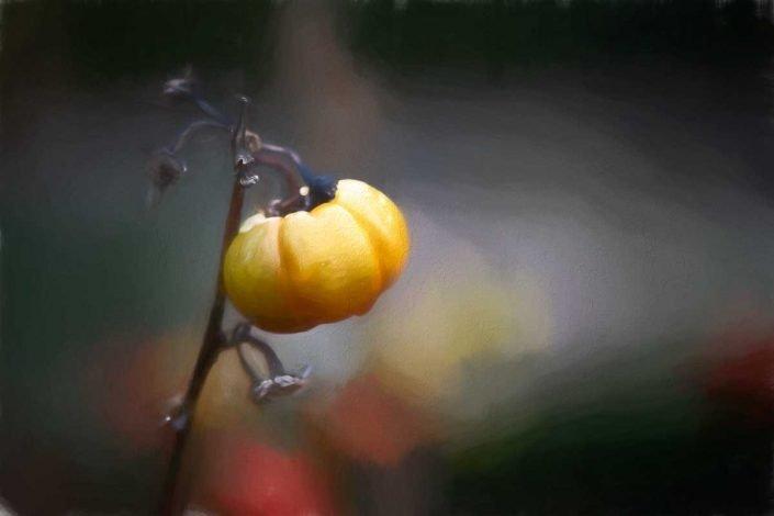 Plantae - Digital Paintings - Flores