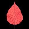 Plantae - Leaves#02 - Color