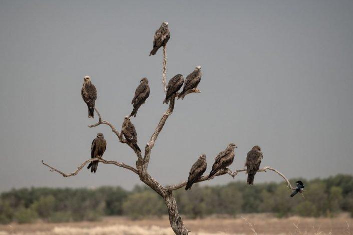 Animalia - Laguna El Taray - Animalia - Laguna El Taray - Aves