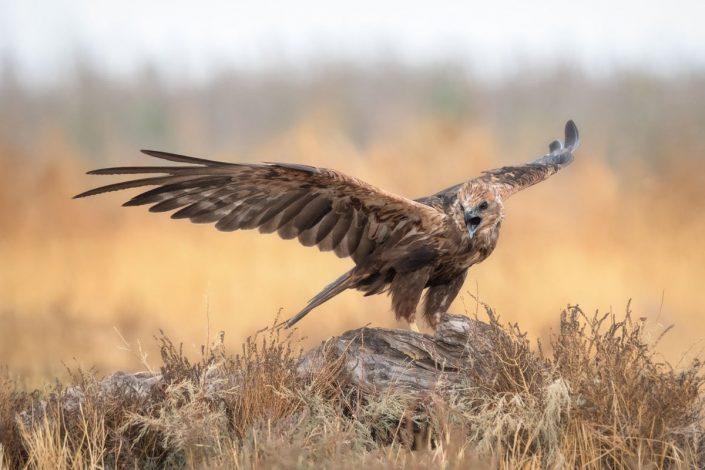 Aves Finca El Taray