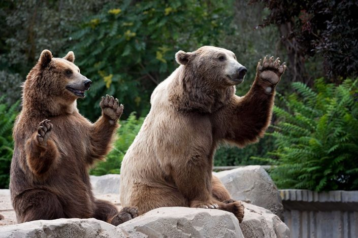 Animalia - Animales en Cautividad - Bear
