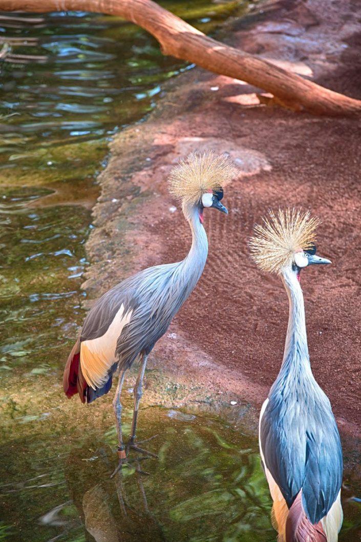 Animalia - Animales en Cautividad - Crane
