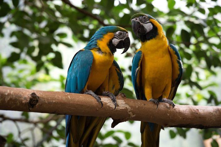 Animalia - Animales en Cautividad - Macaw